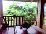 Bungalow at Gardenia Country Inn, Tomohon, North Sulawesi